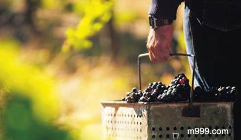 澳大利亚的葡萄酒-美酒在线